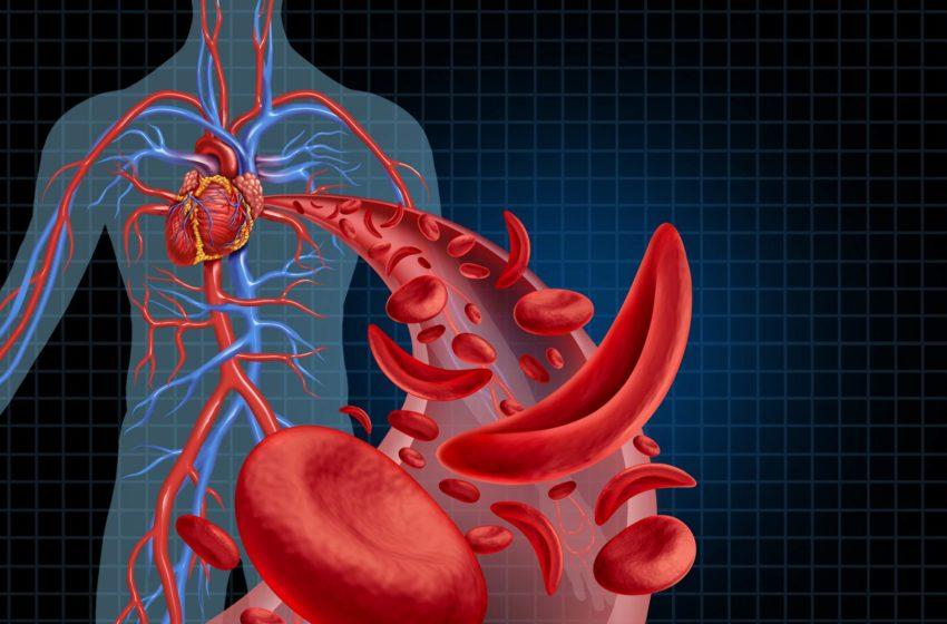 Funktionen des Blutkreislauf
